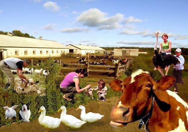 Проект «Ярославский фермер» / 6 / Воркшоп «Rural Urbanism» «Сельский Урбанизм»